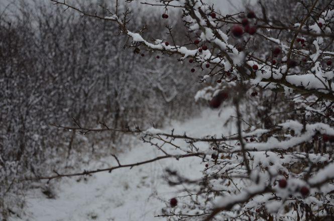 zimowy krajobraz, wiejska ścieżka w śniegu